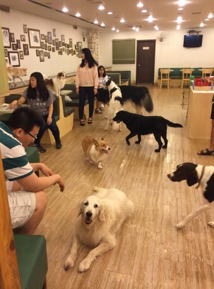 Dog Café Seoul.jpg